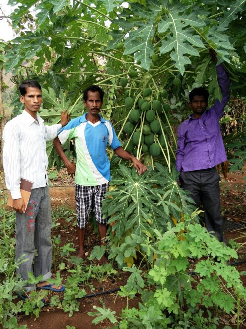 Community Tree Plantations