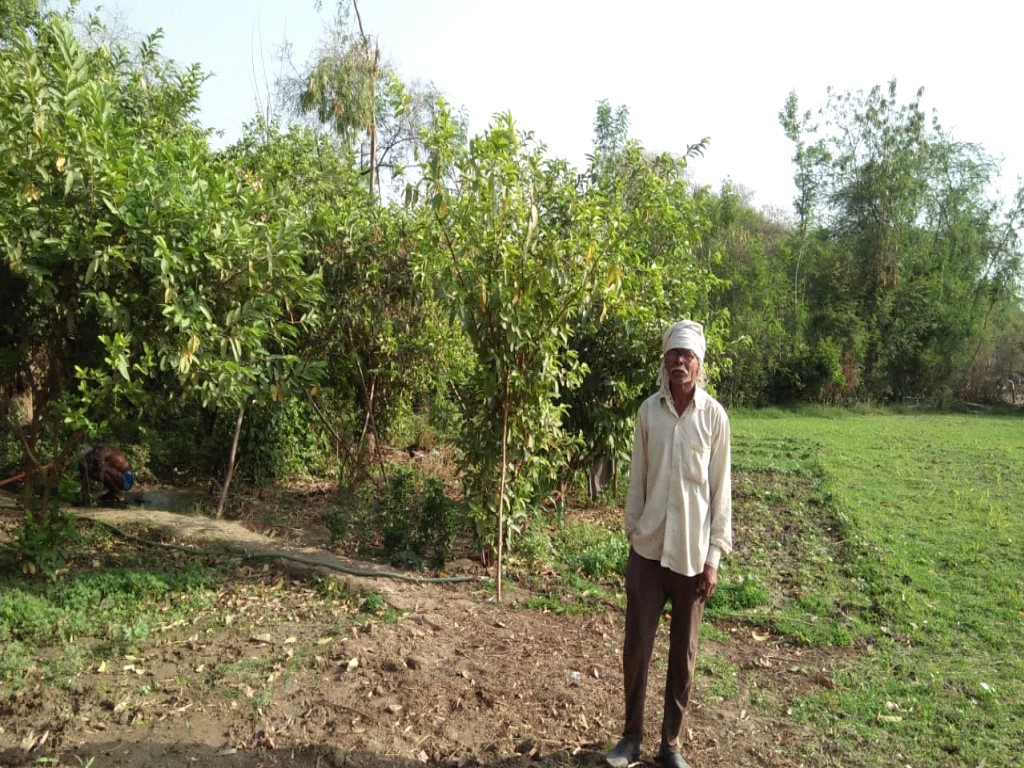 Agricultural Improvements in Bundelkhand